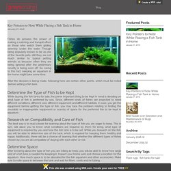 Key Pointers to Note While Placing a Fish Tank in Home