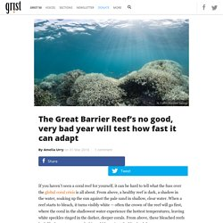 The Great Barrier Reef's no good, very bad year will test how fast it can adapt