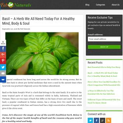 17 Great Uses & Benefits of Basil Herb For A Healthy Mind, Body & Soul