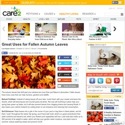 Great Uses for Fallen Autumn Leaves
