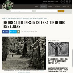 The Great Old Ones: In Celebration of Our Tree Elders