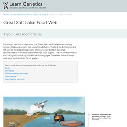 Great Salt Lake Food Web