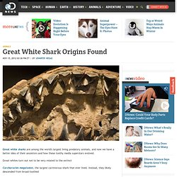 Great White Shark Origins Found