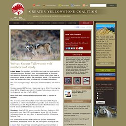 Greater Yellowstone Coalition - Wolves: Good News for Yellowstone Wolves