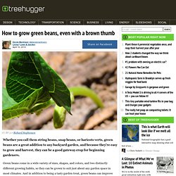 How To Grow Green Beans, Even With A Brown Thumb