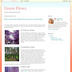Green Flows: What are the Top 10 Most Famous Trees in the World?