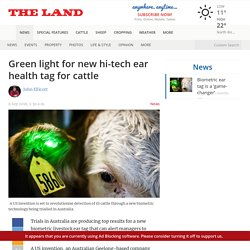 New Hi-Tech Ear Health Tag for Cattle Alerts Managers to Illness.