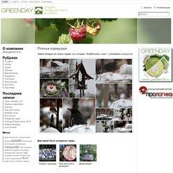 Ландшафтный дизайн в г Челябинск — студия GreenDay