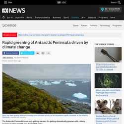 Rapid greening of Antarctic Peninsula driven by climate change - Science News - ABC News