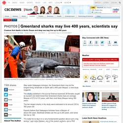 Greenland sharks may live 400 years, scientists say - North