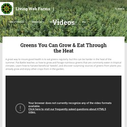 Greens You Can Grow & Eat Through the Heat