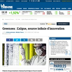 Greensea : L'algue, source infinie d'innovation