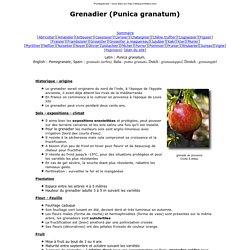 grenade et grenadier