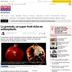 La grenade, un super-fruit riche en antioxydants - 25 mars 2016