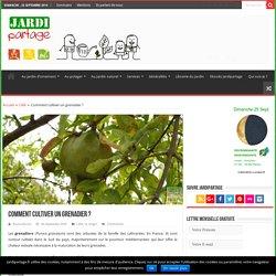 Le grenadier: arbre fruitier ou à fleurs