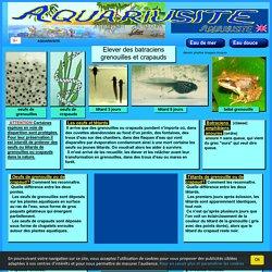 grenouilles,crapauds,pontes,nourrir des têtards,évolution,photos,dessins,élever,batraciens.