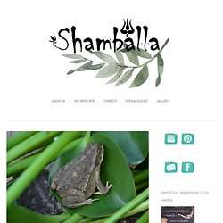 shamballa permaculture permaculture argentina