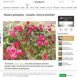 Les rosiers grimpants : particularités, variétés et entretien