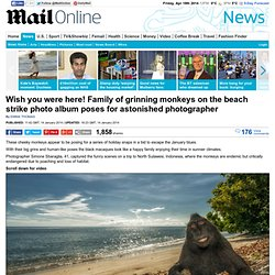 Family of grinning monkeys on beach strike photo album poses for photographer