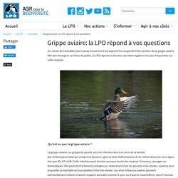 Grippe aviaire la LPO répond à vos questions