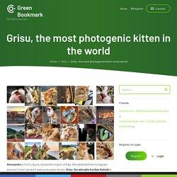 Grisu, the most photogenic kitten in the world