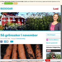 Så grönsaker i november
