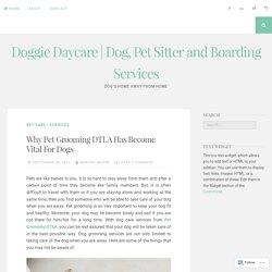 The Importance of Pet Grooming - BoneSweetBone