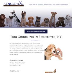 Dog Grooming Rochester NY, Dog Training Rochester, Doggy Day Spa, Dog Groomers Pittsford, Fairport, Brighton NY