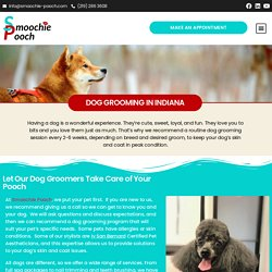 Dog Grooming Service in Indiana that You Can Trust