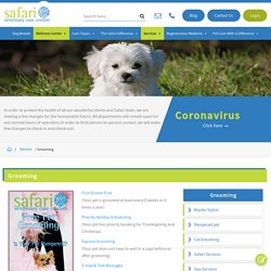 Affordable and top-rated grooming services for pets in Houston, TX