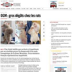OGM : gros dégâts chez les rats