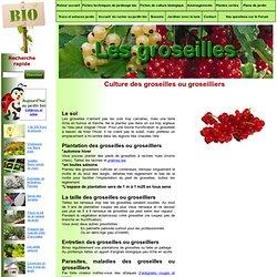 les groseilles et groseilliers culture et plantation