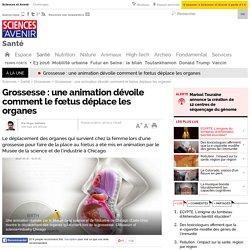 Grossesse : une animation dévoile comment le fœtus déplace les organes