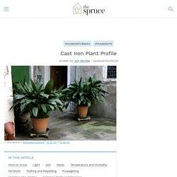 How to Grow Cast Iron Plants (Aspidistra)