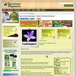 Guide to Growing Codonopsis