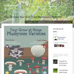 How To Grow Your Own Fresh Mushrooms At Home…