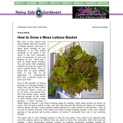 How to Grow a Wire and Moss Lettuce Hanging Basket