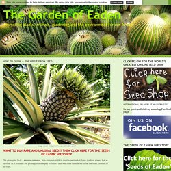 HOW TO GROW A PINEAPPLE FROM SEED