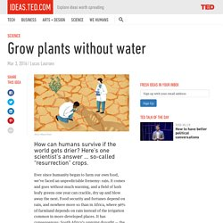 Grow plants without water