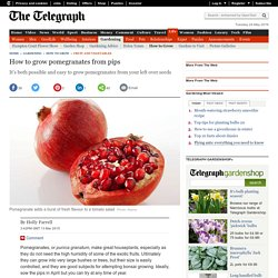 How to grow pomegranates from pips