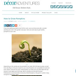 How to Grow Pumpkins » Decor Adventures