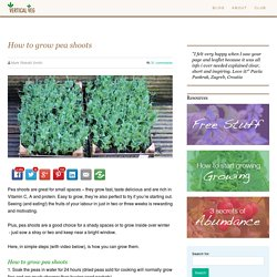 How to grow pea shoots – the perfect container crop