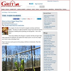 How to Grow Sugar Snap Peas - The Farm Barbie Blog