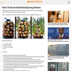 How To Grow Unlimited Spring Onions
