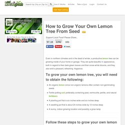How to Grow Your Own Lemon Tree From Seed