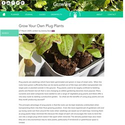Grow Your Own Plug Plants