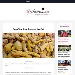 Grow Your Own Turmeric In a Pot – REALfarmacy.com