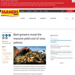 FARMERS WEEKLY (UK) 06/11/20 Beet growers reveal the massive yield cost of virus yellows