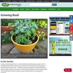 Growing Basil - Bonnie Plants