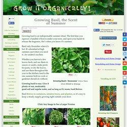 Growing Basil, How to Grow Basil